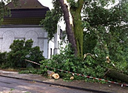 Der Baum auf der Steinbrinkstraße in Duisburg-Wanheim