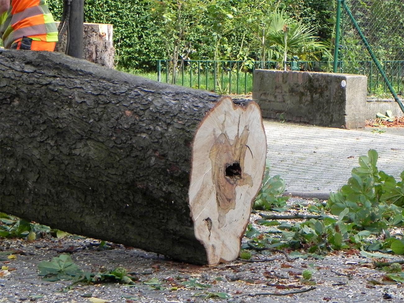 Kranker Baum mit Loch im Stamm
